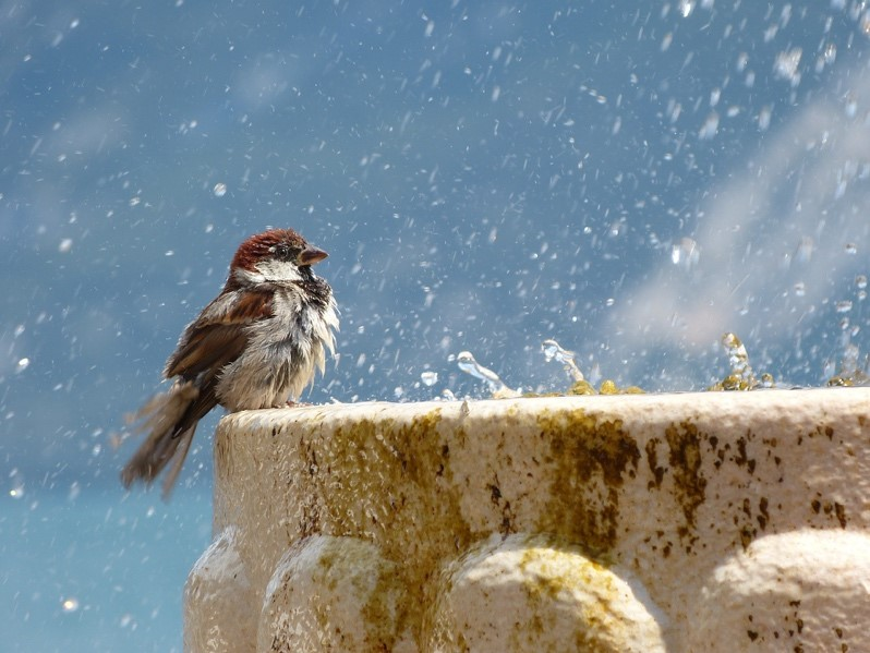Small bird at the edge of a stone water fountain in the snow
